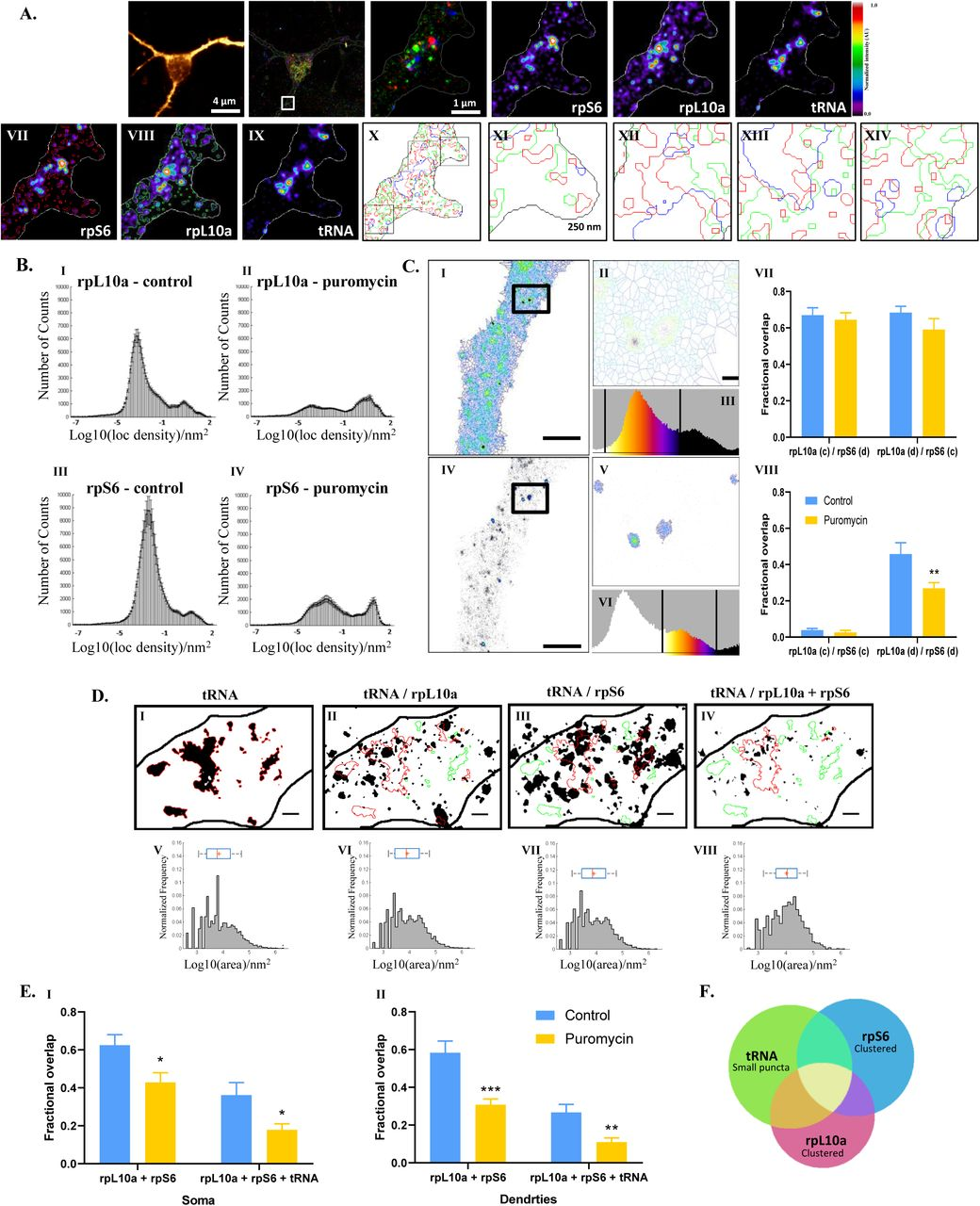 Measuring mRNA translation in neuronal processes and somata by tRNA