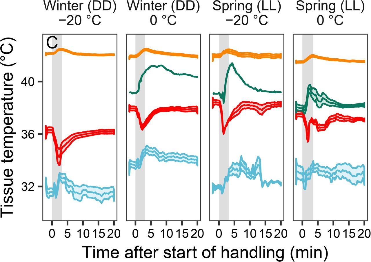 Ambient temperature effects on stress-induced hyperthermia