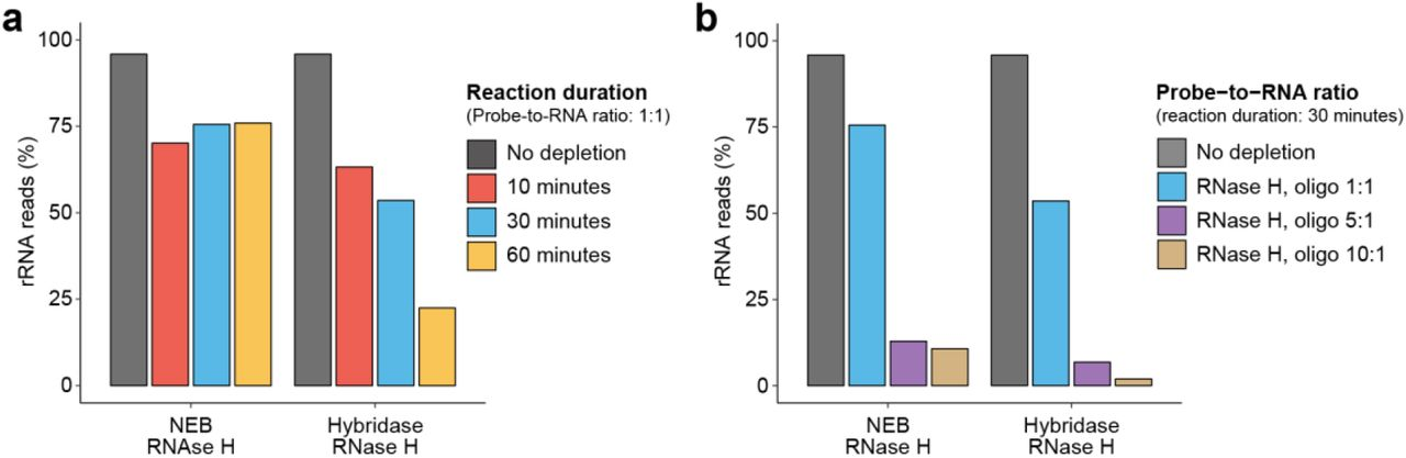 Optimization of RNase H reaction conditions. a) Proportion of rRNA-aligning reads of total mapped reads (% rRNA reads), for un-depleted and RNase H depleted samples for two RNase H enzymes and various reaction times with probe-to-RNA fixed to 1:1, or b) various probe-to-RNA ratios with reaction time fixed to 30 minutes. The same RNA sample isolated from Bacteroides dorei was split for rRNA depletion across different reaction conditions.