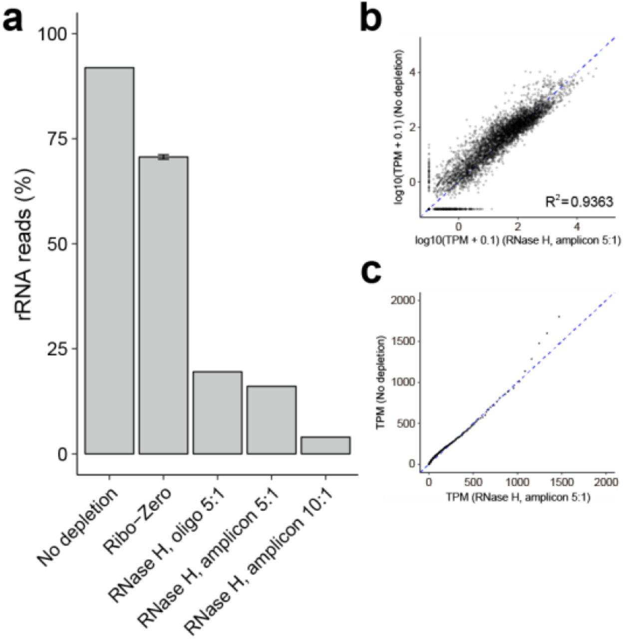 RNase H based rRNA depletion with amplicons. a) Proportion of rRNA-aligning reads of total mapped reads (% rRNA reads), for un-depleted, Ribo-Zero depleted, and RNase H depleted samples with chemically synthesized oligonucleotides (oligo) or amplicon-based ssDNA (amplicon) probes. b, c) Scatter plot (b) and Quantile-Quantile (Q-Q) plot (c) for depleted sample using amplicon probes with 5:1 probe-to-RNA ratio and un-depleted sample.