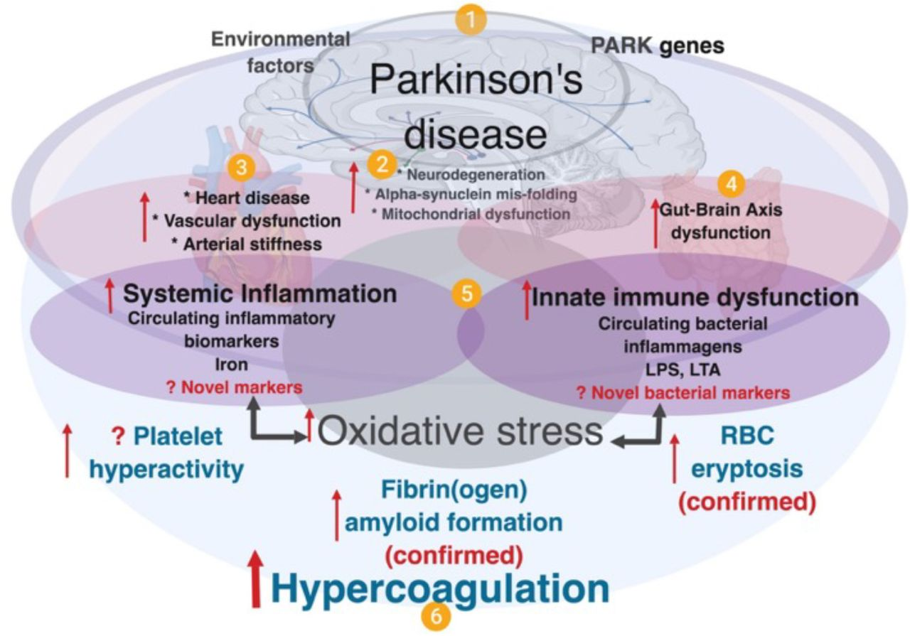 Parkinsons Disease Progression >> Parkinson's disease: a systemic inflammatory disease accompanied by bacterial inflammagens | bioRxiv