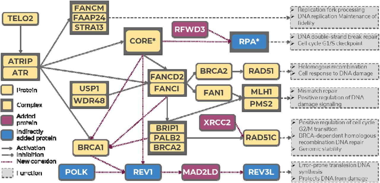 Exploring the druggable space around the Fanconi anemia pathway