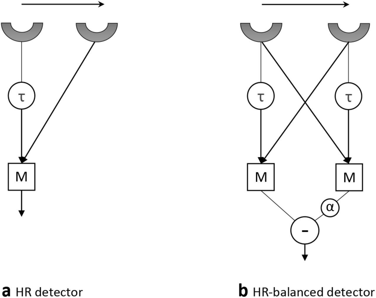 AVDM: Angular Velocity Decoding Model Accounting for