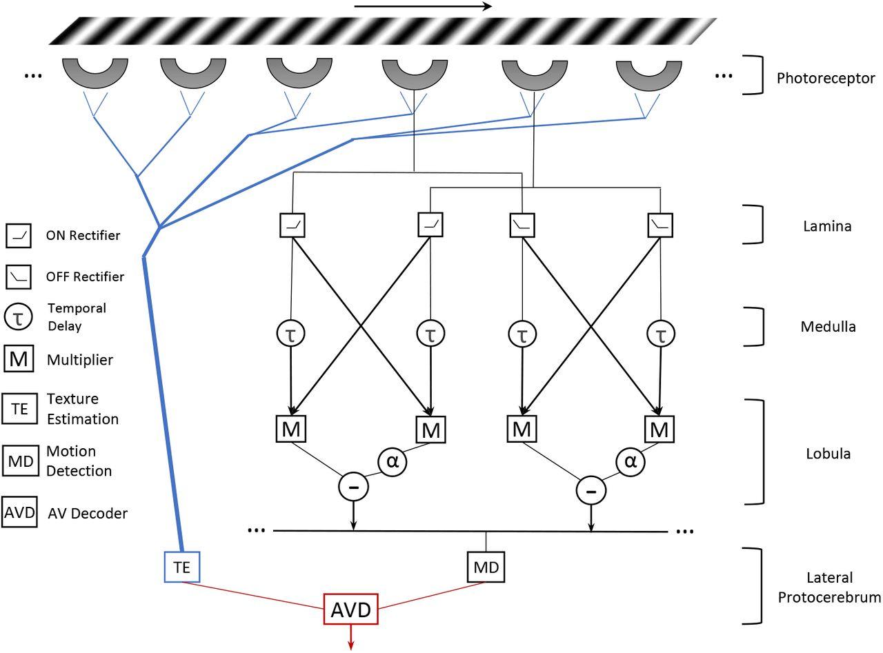 AVDM: Angular Velocity Decoding Model Accounting for Visually Guided