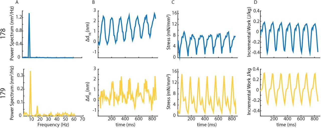 A nanometer difference in myofilament lattice spacing of two