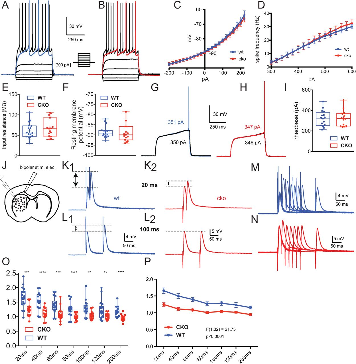 Neuropilin 2 signaling mediates corticostriatal transmission ... on