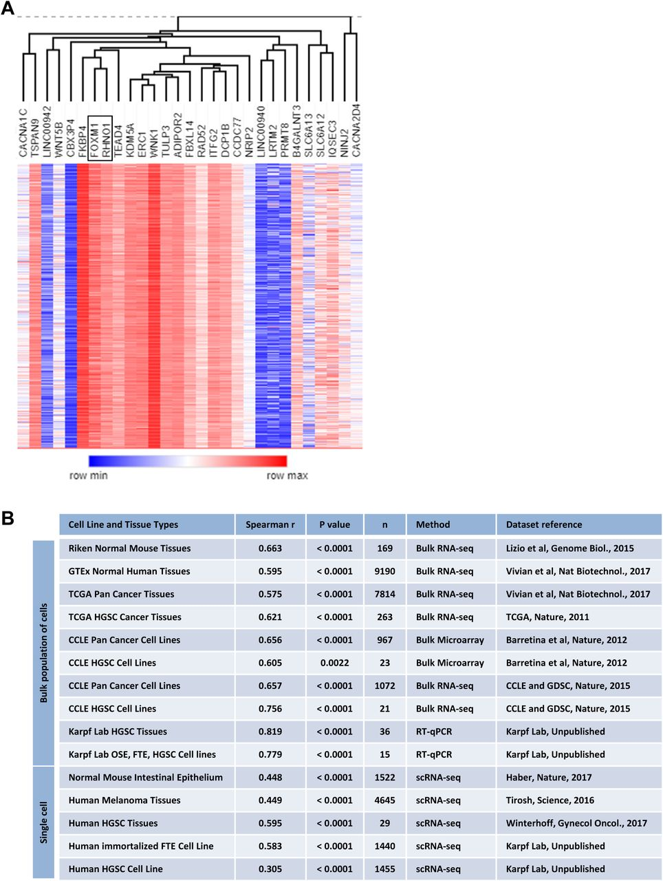 Co-regulation and functional cooperativity of FOXM1 and