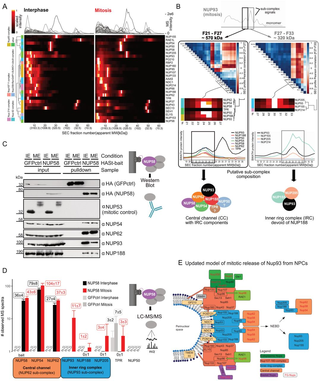 A global screen for assembly state changes of the mitotic