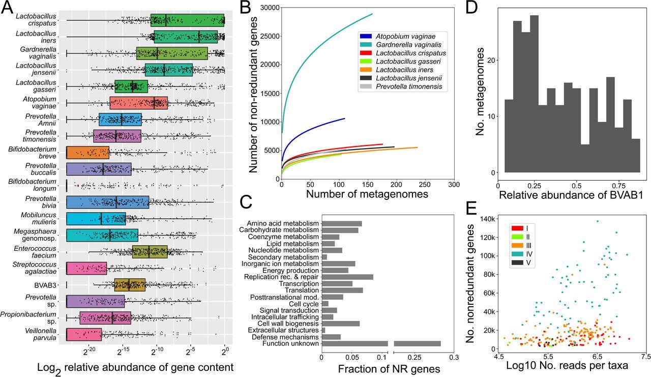 VIRGO, a comprehensive non-redundant gene catalog, reveals