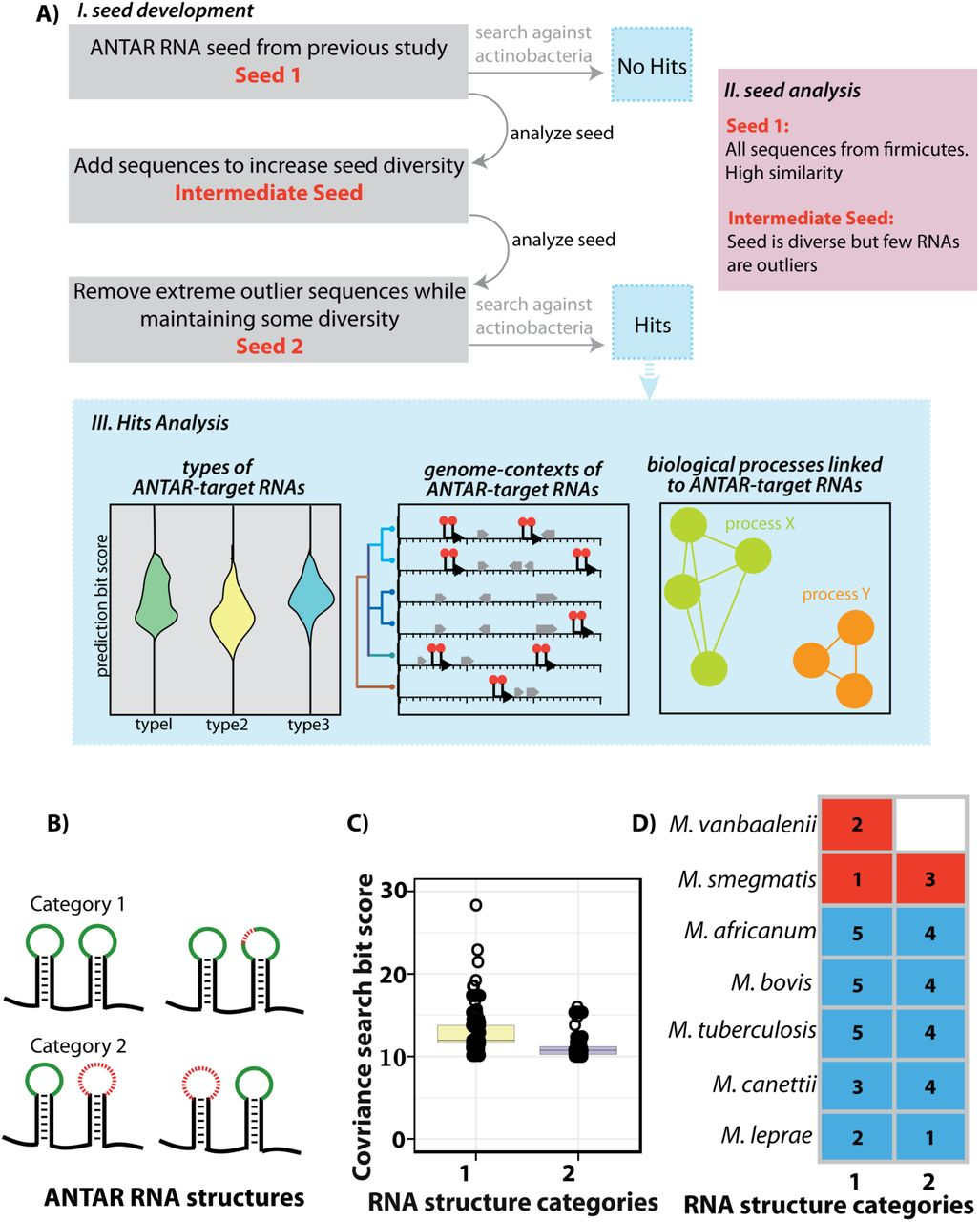 Non-coding RNAs control metabolic state in mycobacteria