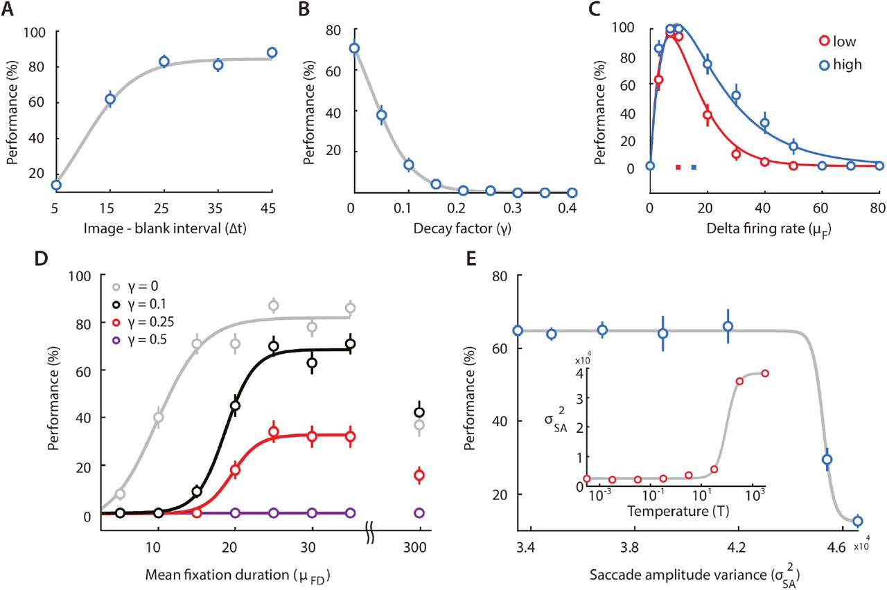 Neurally-constrained modeling of human gaze strategies in a