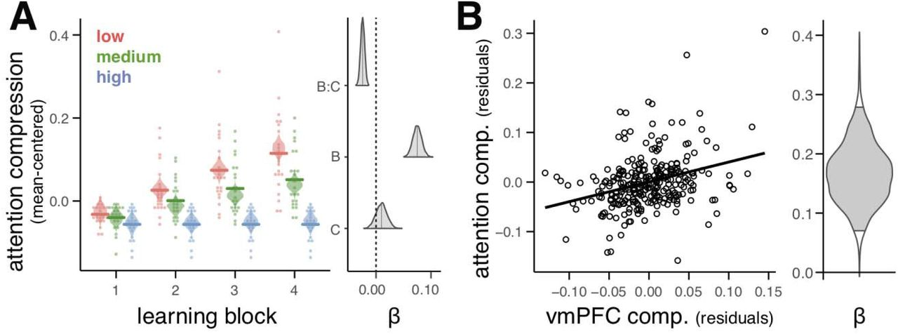 Ventromedial prefrontal cortex compression during concept learning
