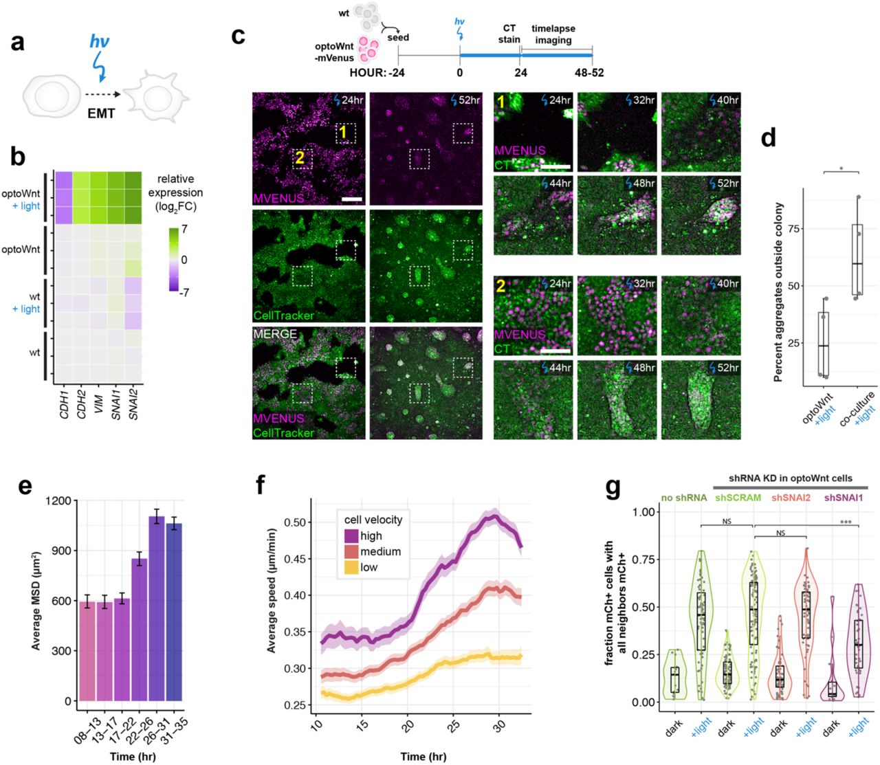 Opnetic control of Wnt signaling for modeling early ... on