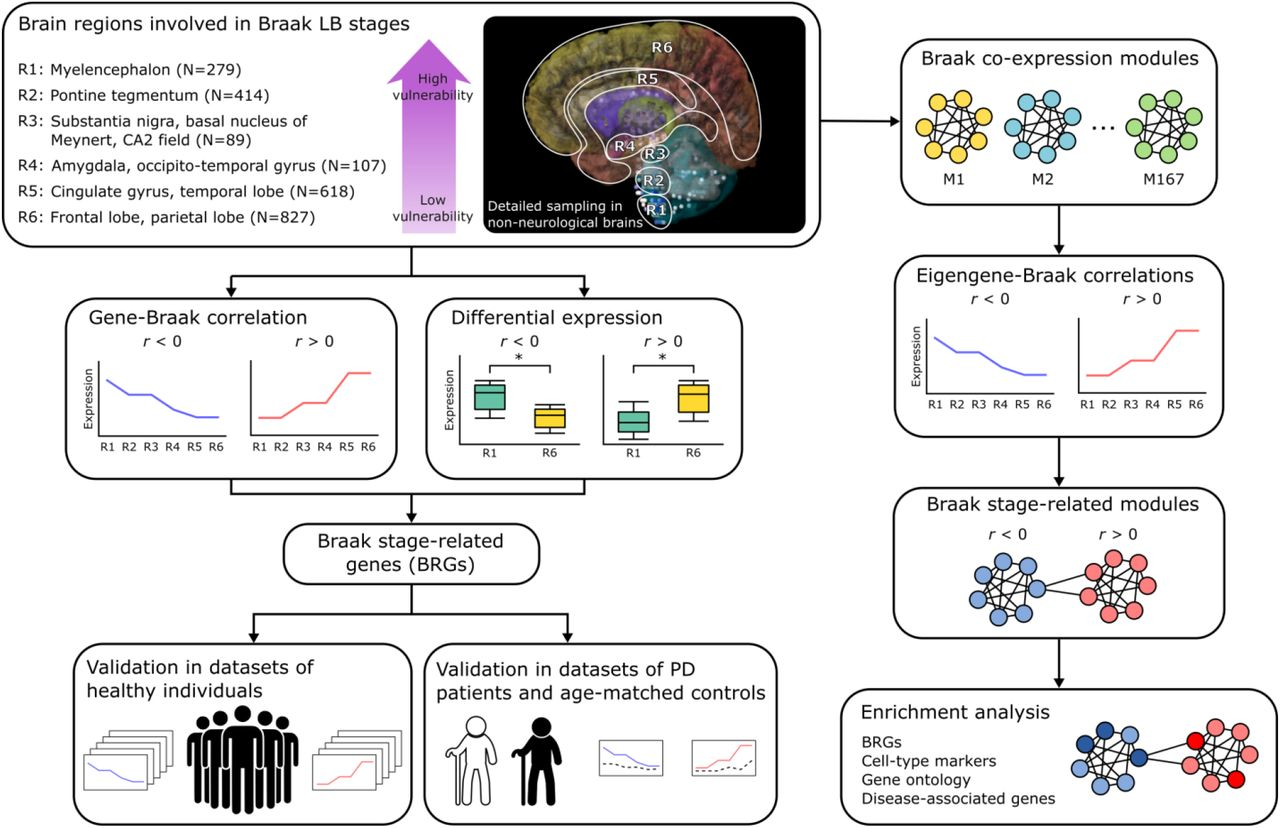 Transcriptomic signatures of brain regional vulnerability to