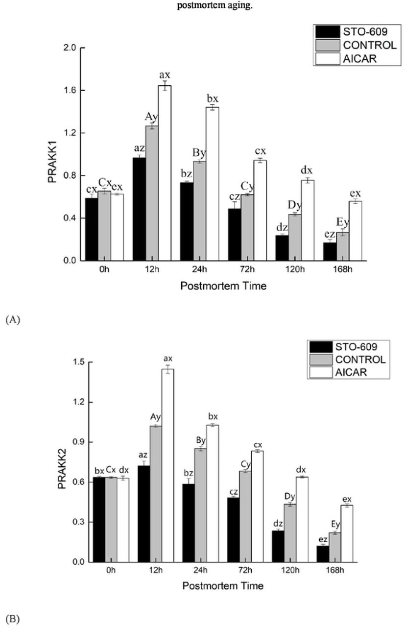 Effect of AICAR and STO-609 on AMPKα1(A), AMPKα2 (B) mRNA were treated with or without AICAR (10 mM) and STO-609 (10 mM) for the time as indicated above and total RNA was subjected to real-time RT-PCR as described in Materials and methods. The results were expressed as a relative value compared to the untreated sample as 100%. All data were represented as means ± SEM of three independent experiments. P