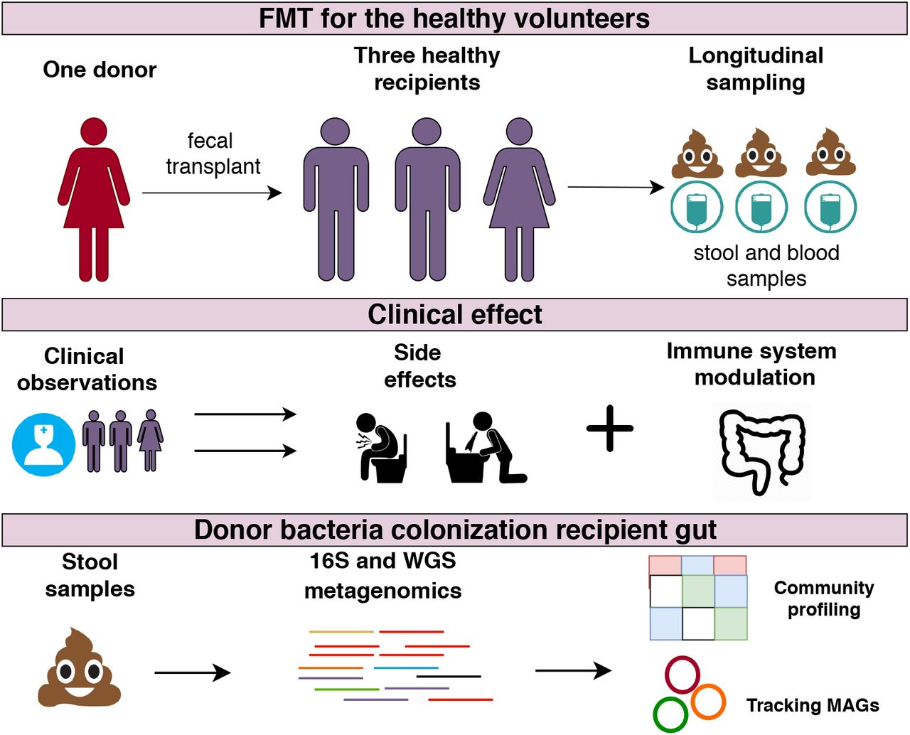Long-term impact of fecal transplantation in healthy