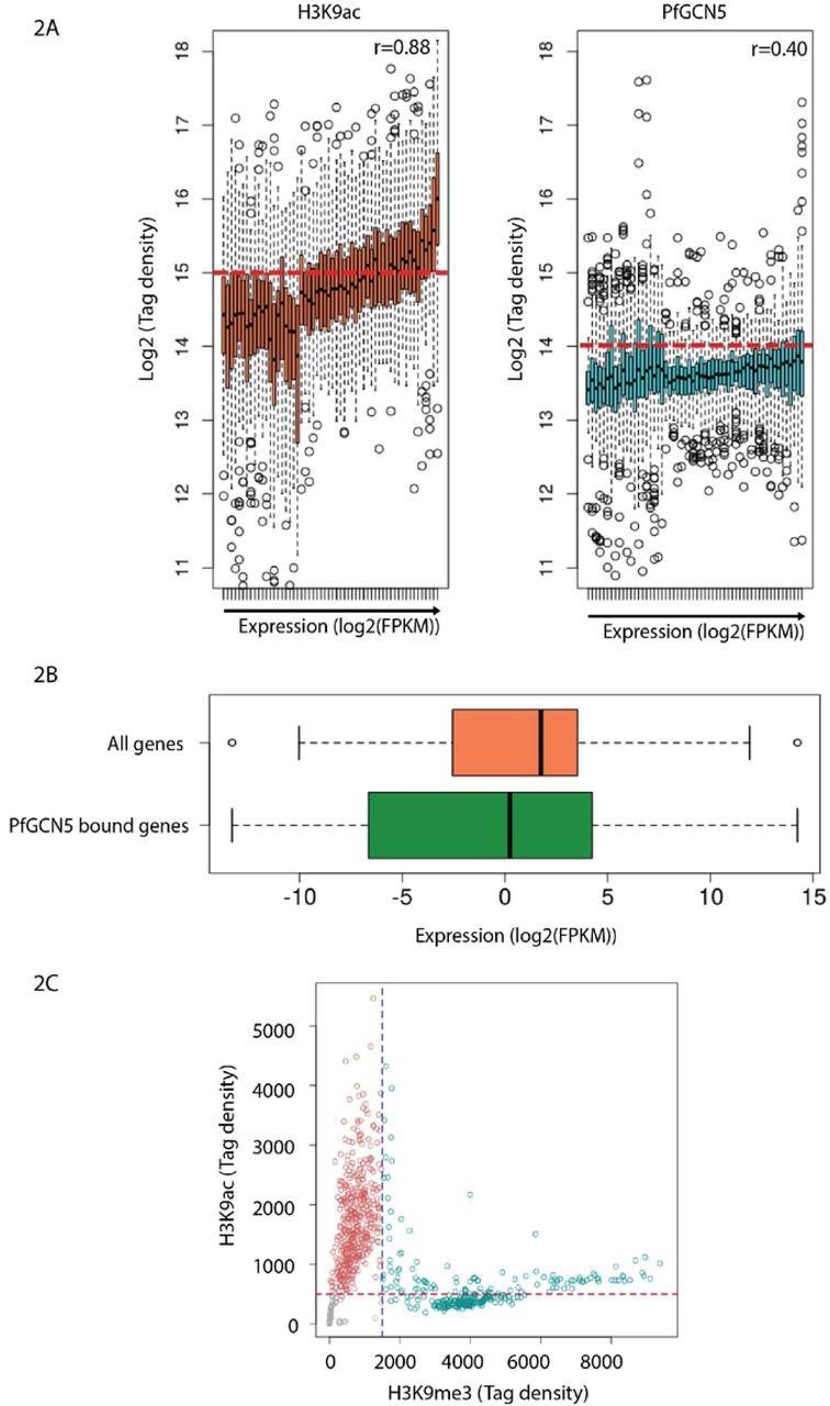 PfGCN5, a global regulator of stress responsive genes
