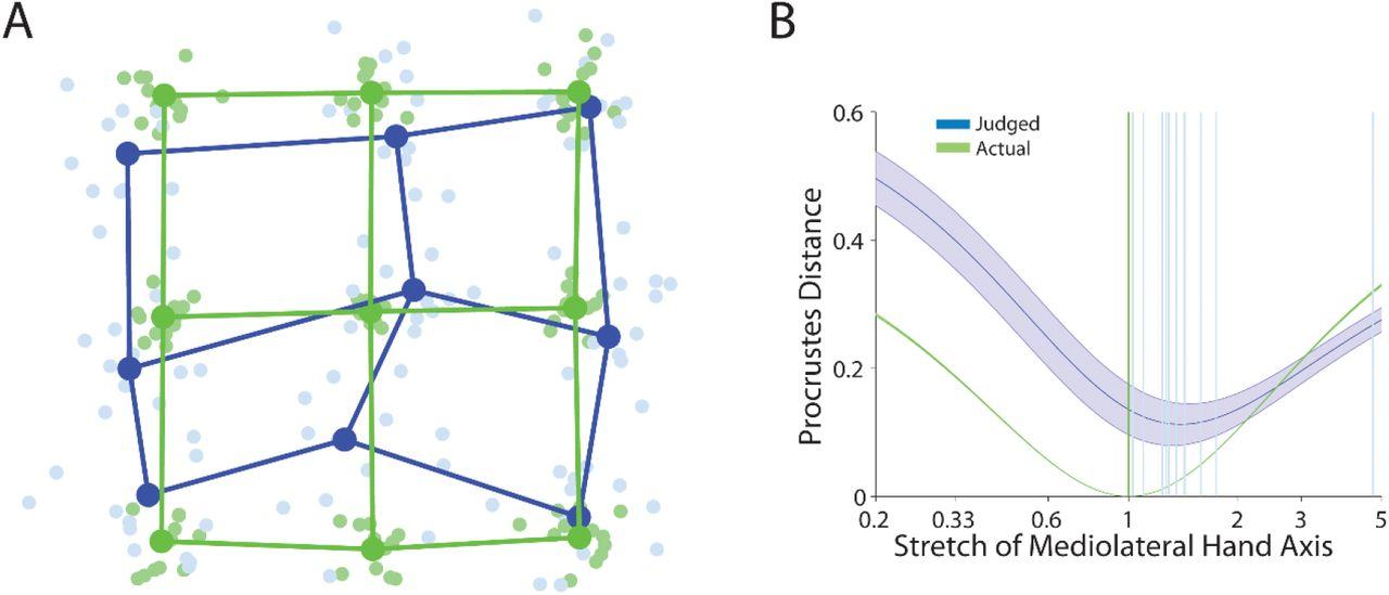 Reconstructing neural representations of tactile space | bioRxiv
