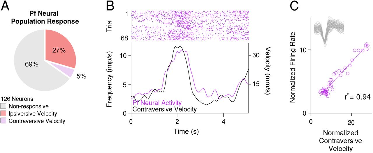 A diencephalic pathway for movement initiation and rescue of