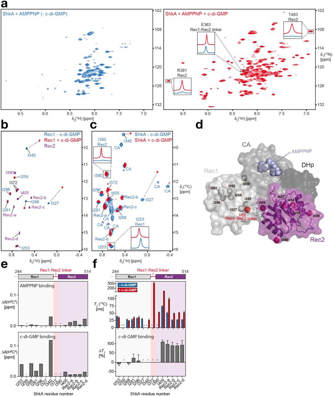 Hybrid histidine kinase activation by cyclic di-GMP-mediated