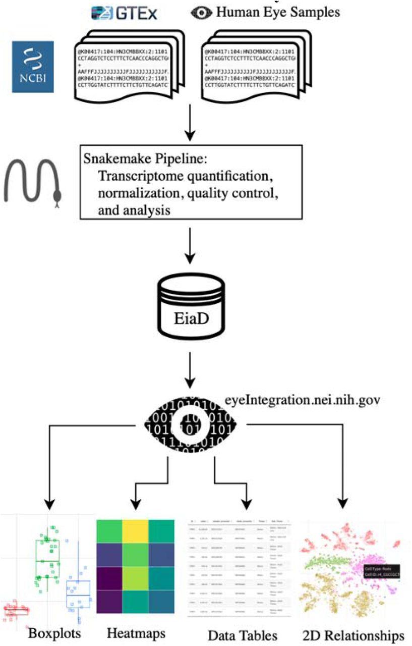 Eye in a Disk: eyeIntegration human pan-eye and body