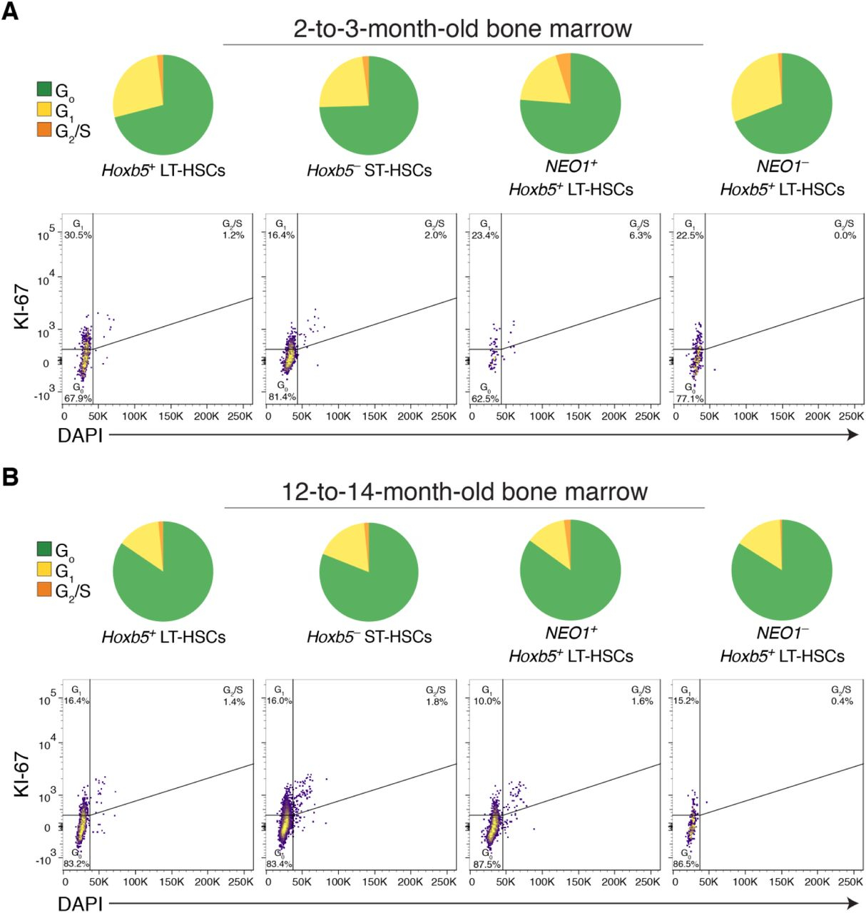 Neogenin-1 distinguishes between myeloid-biased and balanced