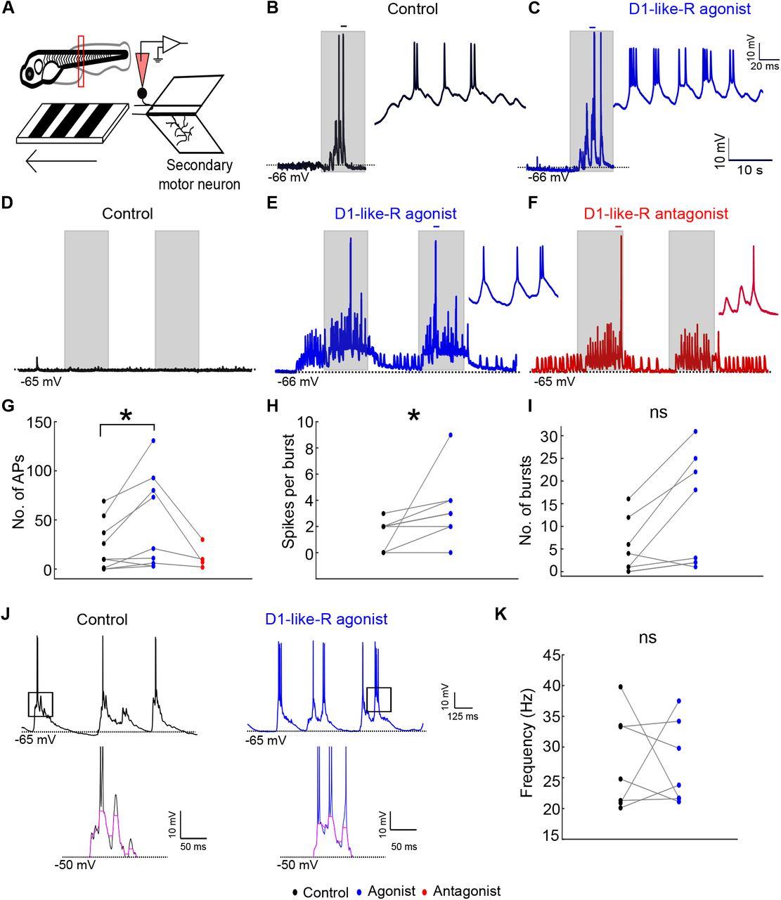 Neuromodulatory selection of motor neuron recruitment