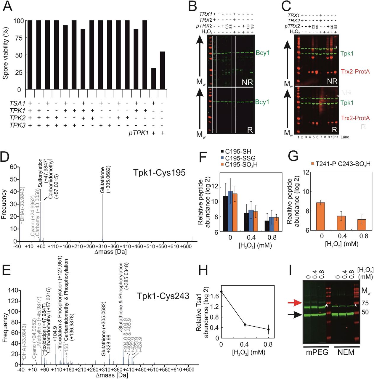 Peroxiredoxin promotes longevity and H2O2-resistance in ... on