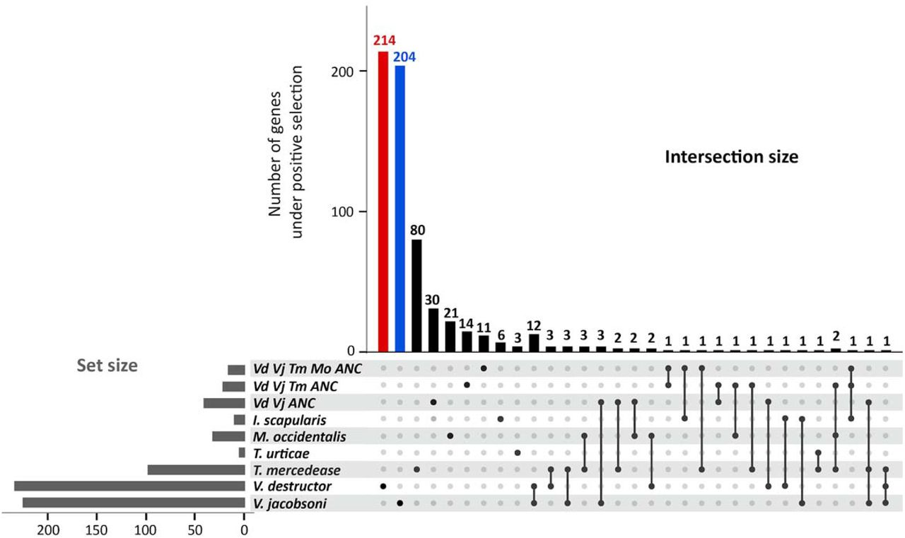 Divergent selection following speciation in two