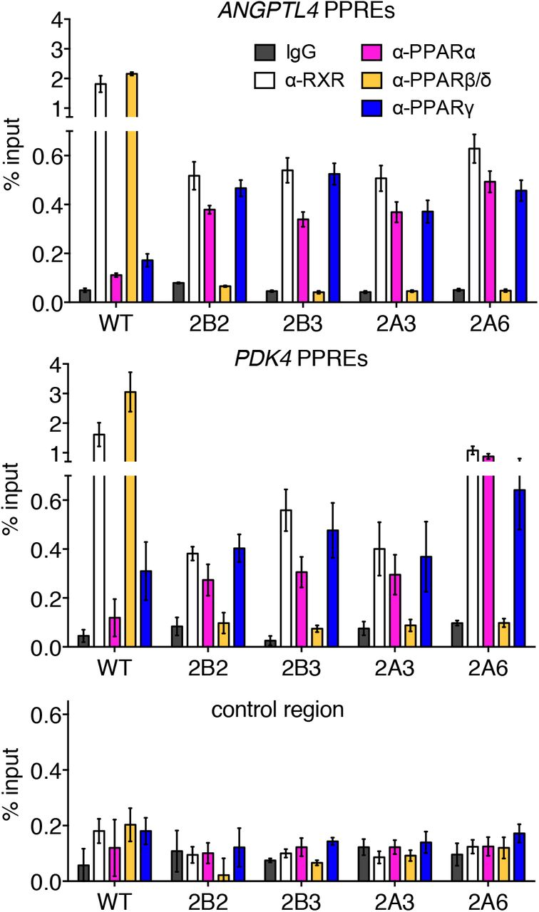 PPARβ/δ recruits NCOR and regulates transcription