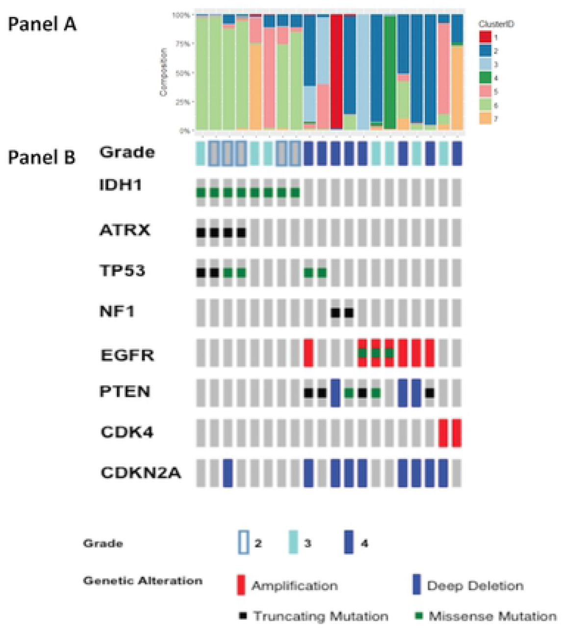 Tumor cell phenotype and heterogeneity differences in IDH1
