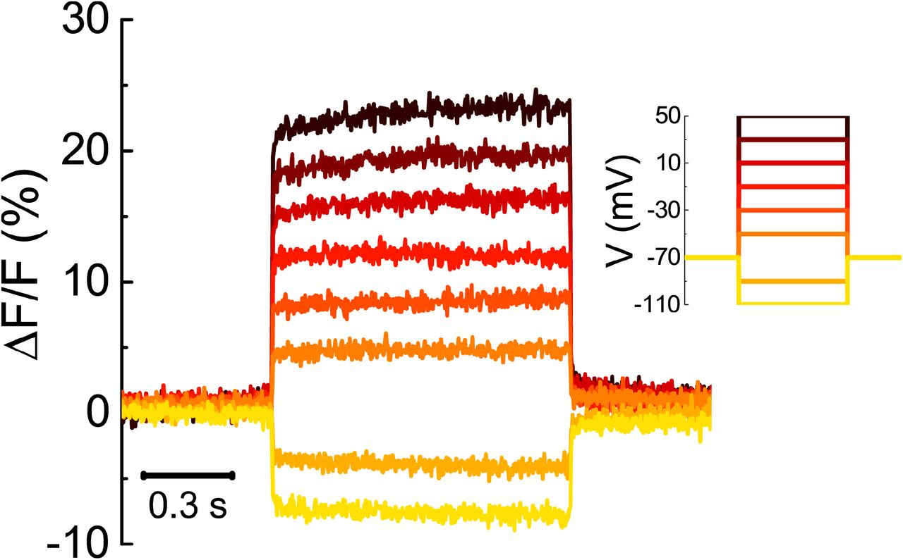 A general approach to engineer positive-going eFRET voltage