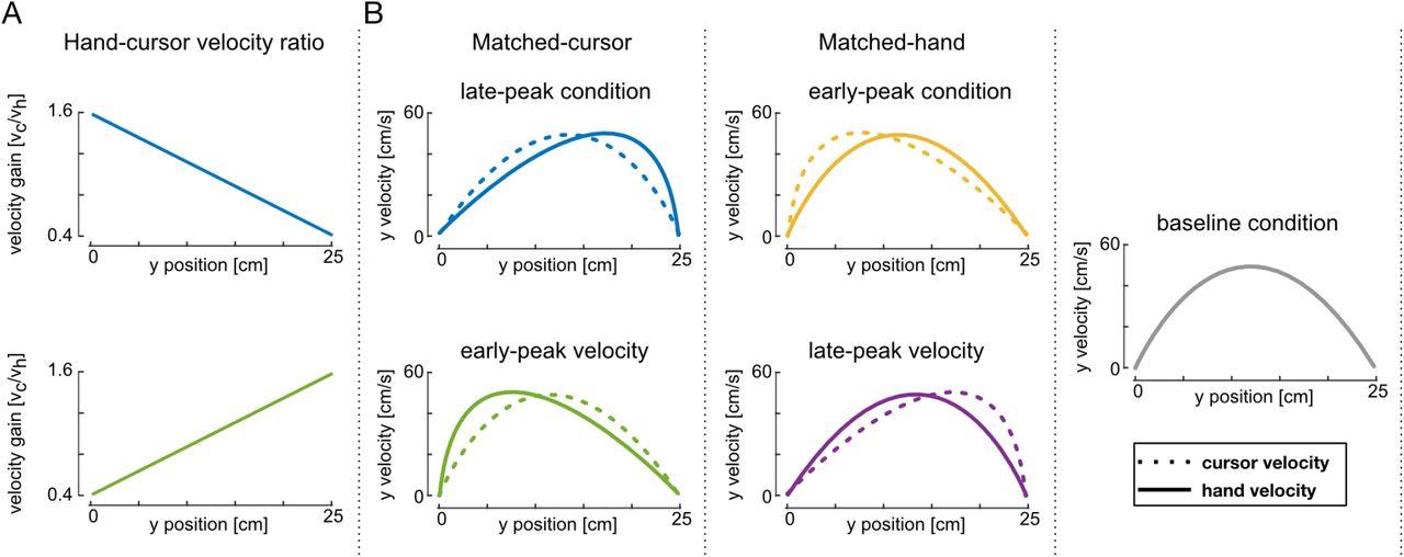 Time-to-target simplifies optimal control of visuomotor