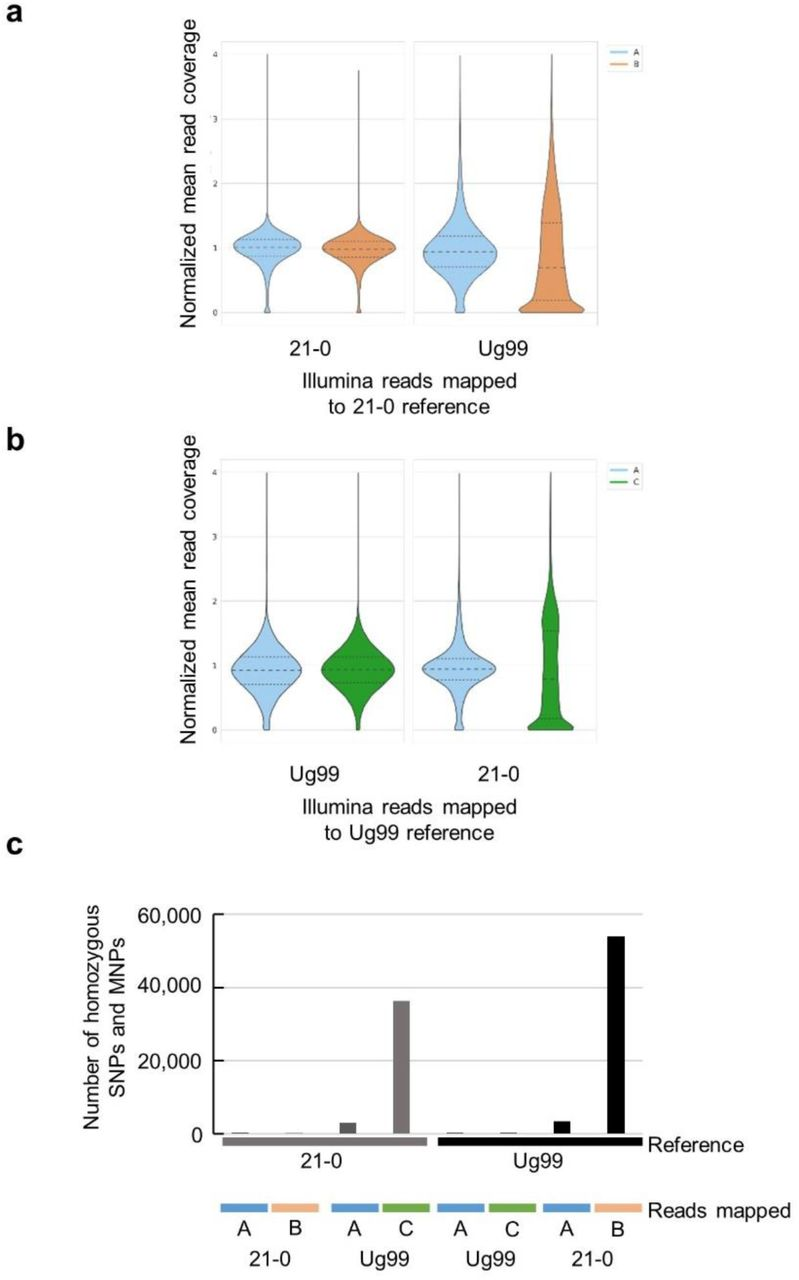 Emergence of the Ug99 lineage of the wheat stem rust