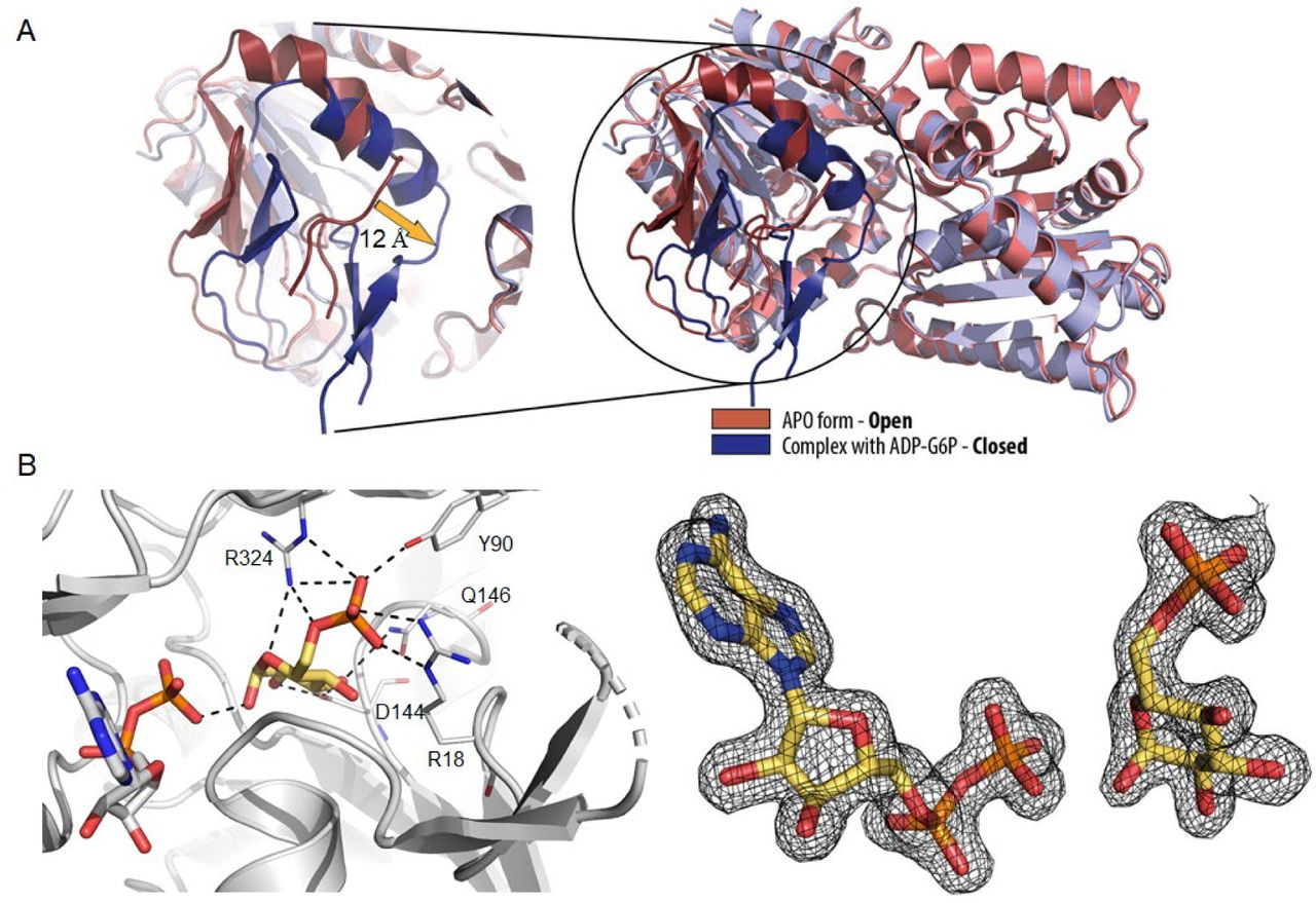 Mycobacterial OtsA structures unveil substrate preference