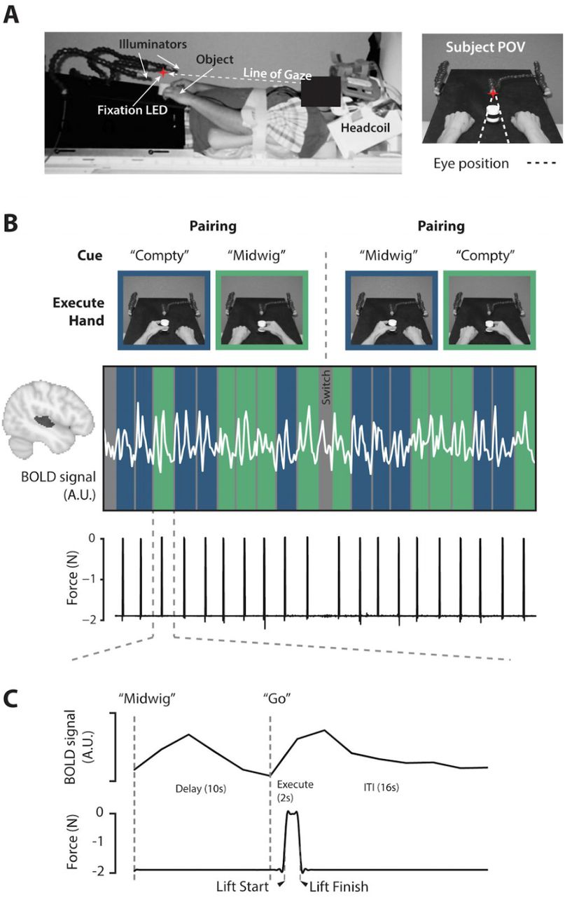 Motor planning modulates neural activity patterns in early human