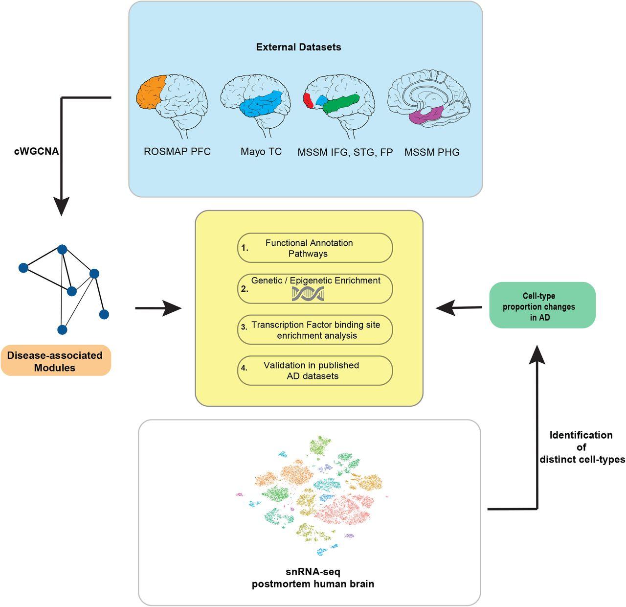 Integrative genomics approach identifies conserved