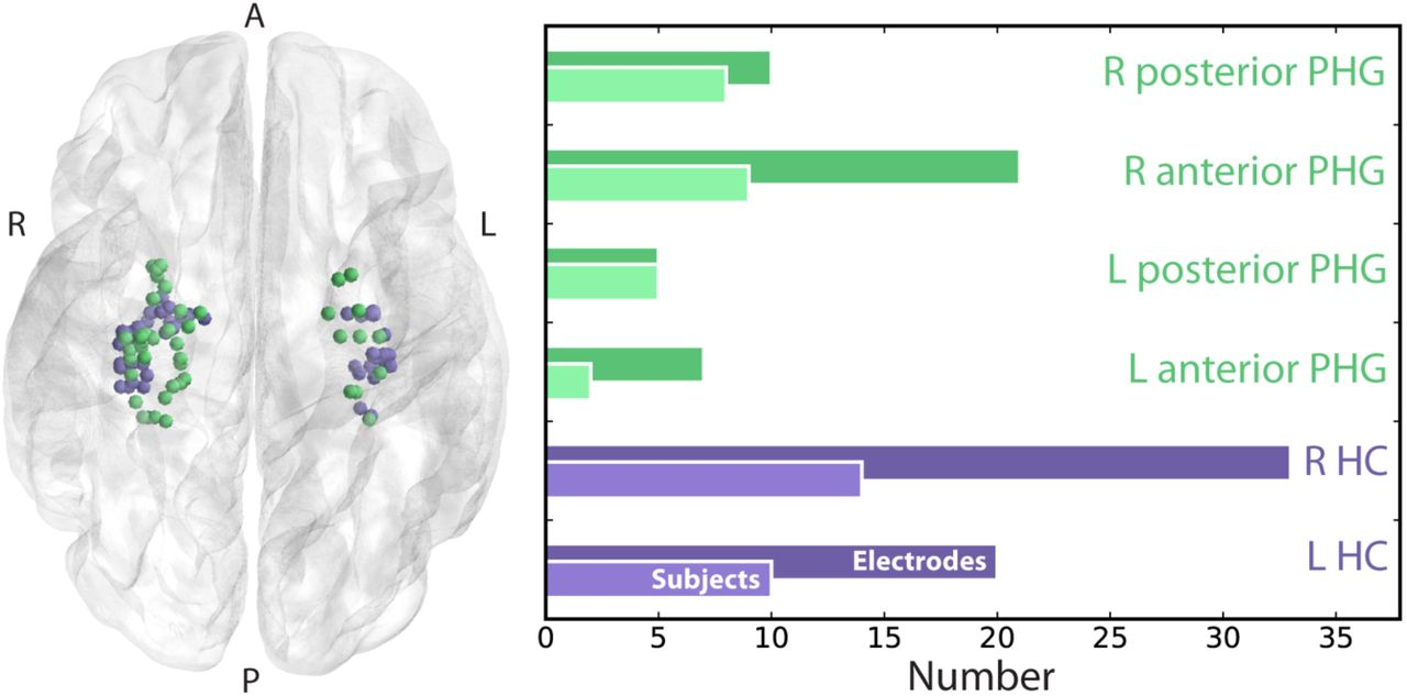 Reactivated spatial context guides episodic recall | bioRxiv