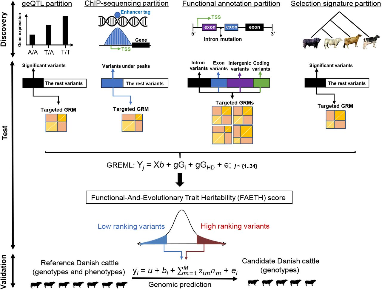 Quantifying the contribution of sequence variants with