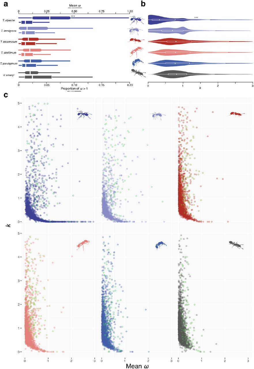 Genomic signature of shifts in selection in a sub-alpine ant