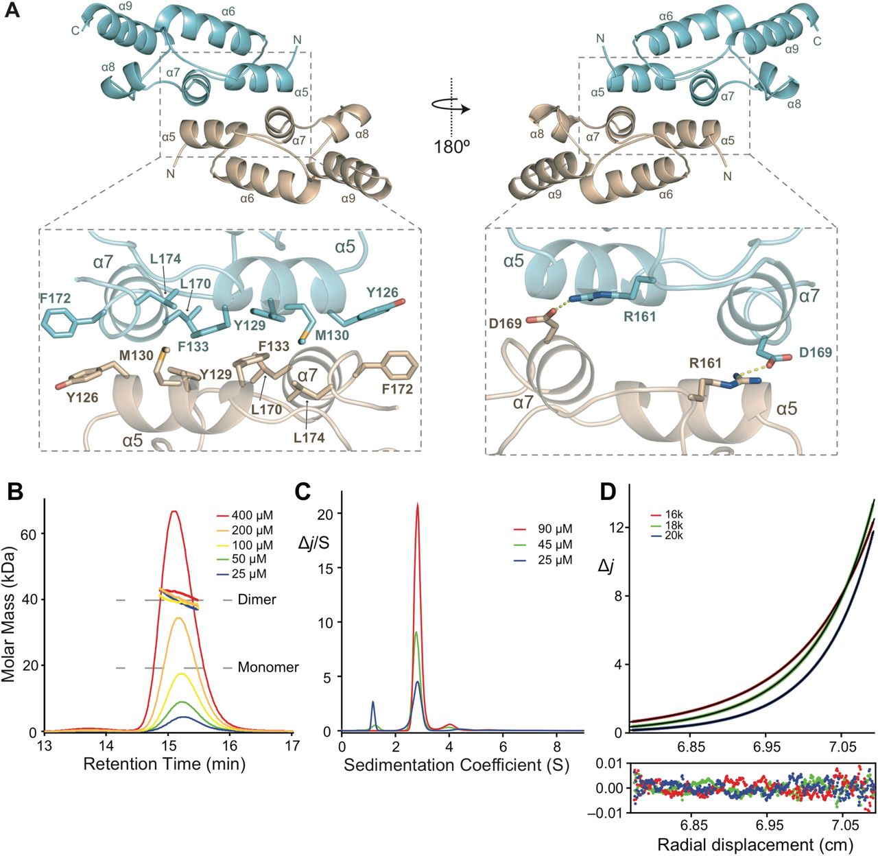 Structure of D  melanogaster ARC1 reveals a repurposed molecule with