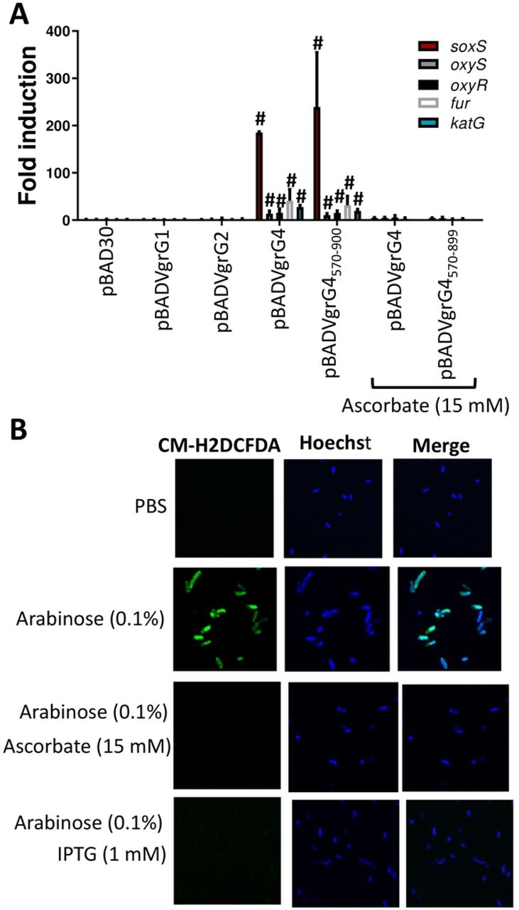 Klebsiella pneumoniae type VI secretion system-mediated microbial