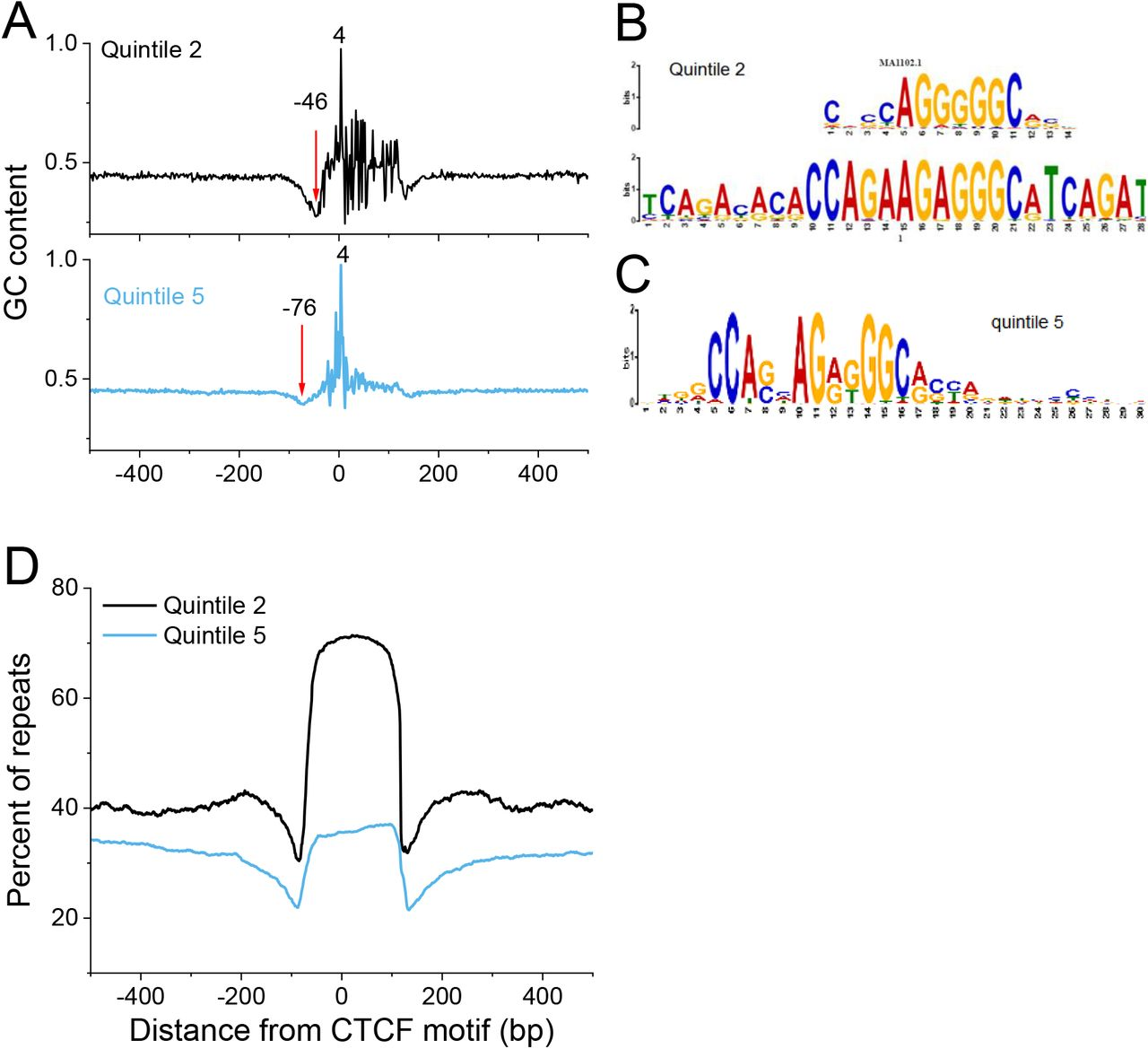 CTCF-dependent chromatin boundaries formed by asymmetric
