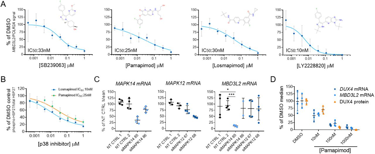 Inhibition of the p38α/β pathway results in normalized gene expression in FSHD myotubes without affecting the differentiation process in vitro ( A ) Quantification of myotube differentiation after p38α/β inhibition. Two inhibitors were used to demonstrate the effects of p38α/β inhibition in a high-content imaging assay to quantify the number of nuclei that properly underwent differentiation by activation of expression of myofiber specific proteins (i.e. MHC). No changes were observed in the morphology of C6 myotubes treated for 5 days. Bars indicate mean±SD. ( B ) Heat map representing fold change of expression levels of differentially expressed genes after p38α/β inhibition in FSHD myotubes for 5 days. 86 genes showed significant changes in expression after treatment with two different inhibitors (abs(FC) > 4; FDR