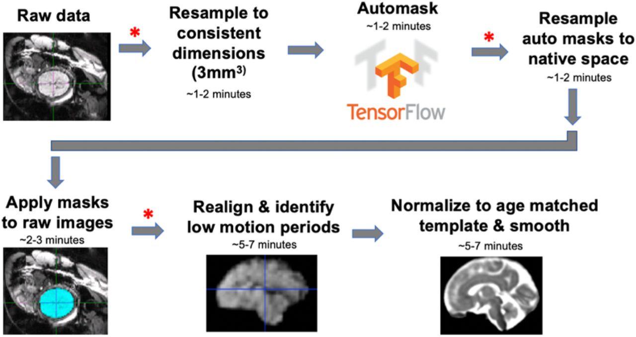 Automated Brain Masking of Fetal Functional MRI | bioRxiv