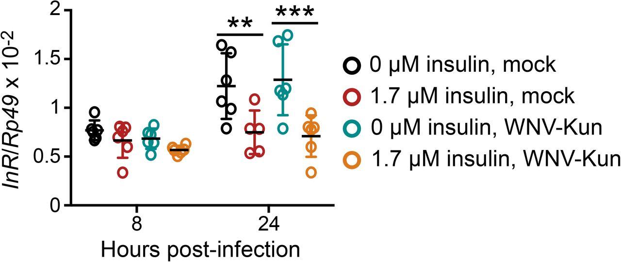 Insulin potentiates JAK/STAT signaling to broadly inhibit
