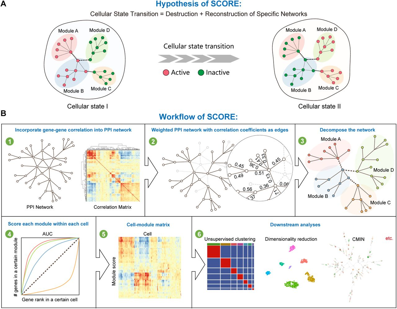 Enhancing single-cell cellular state inference by