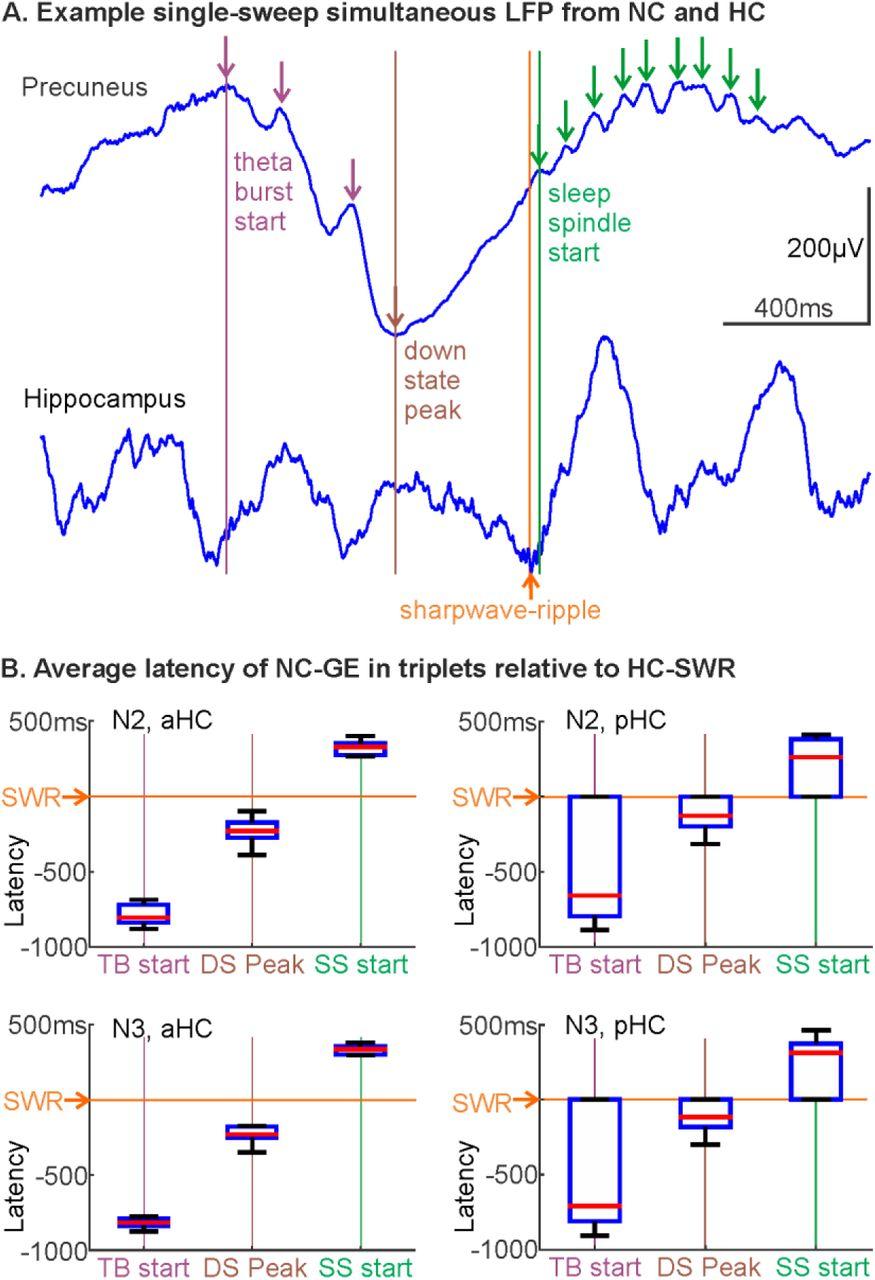 Coordination of human hippocampal sharpwave-ripples during NREM