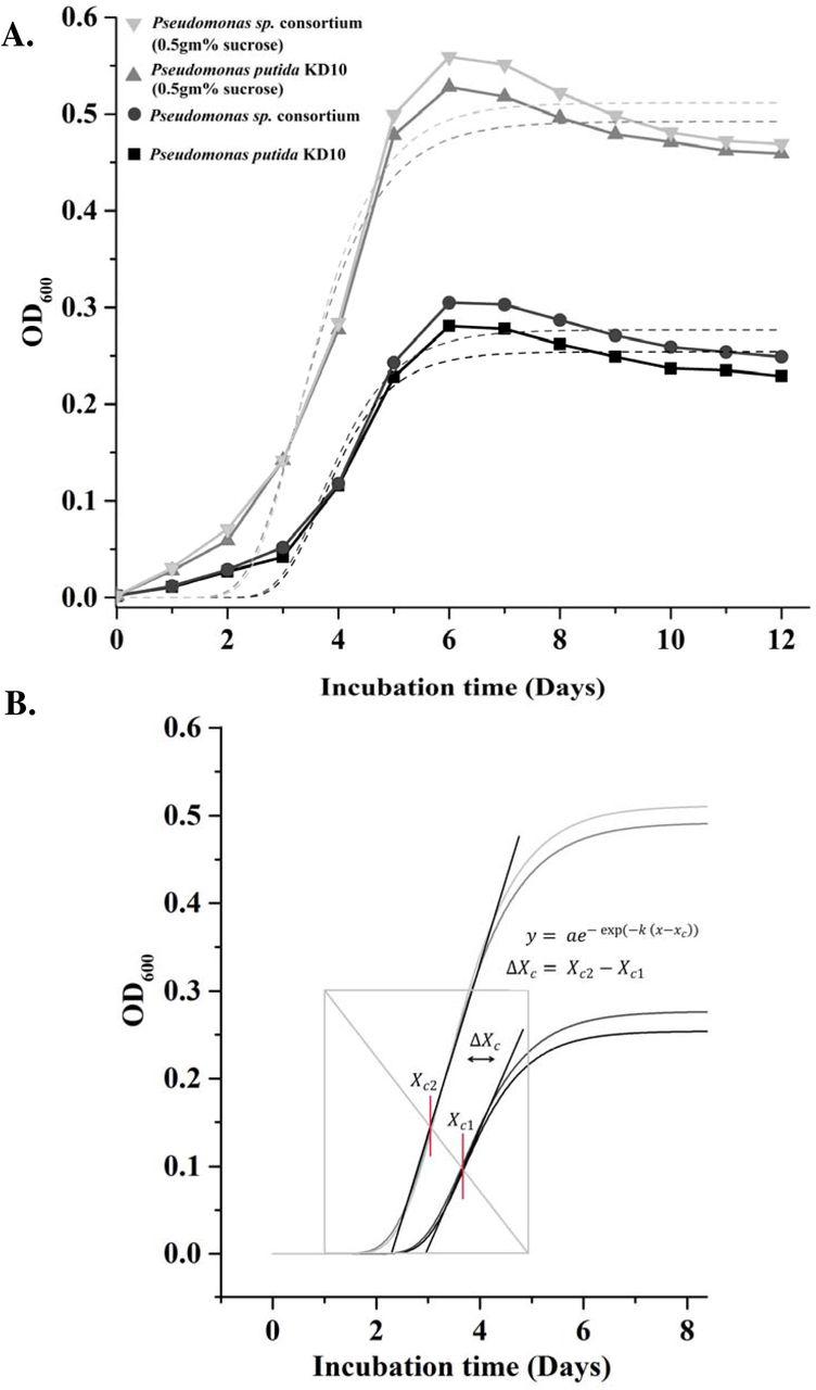 Enhanced biodegradation of naphthalene by Pseudomonas sp