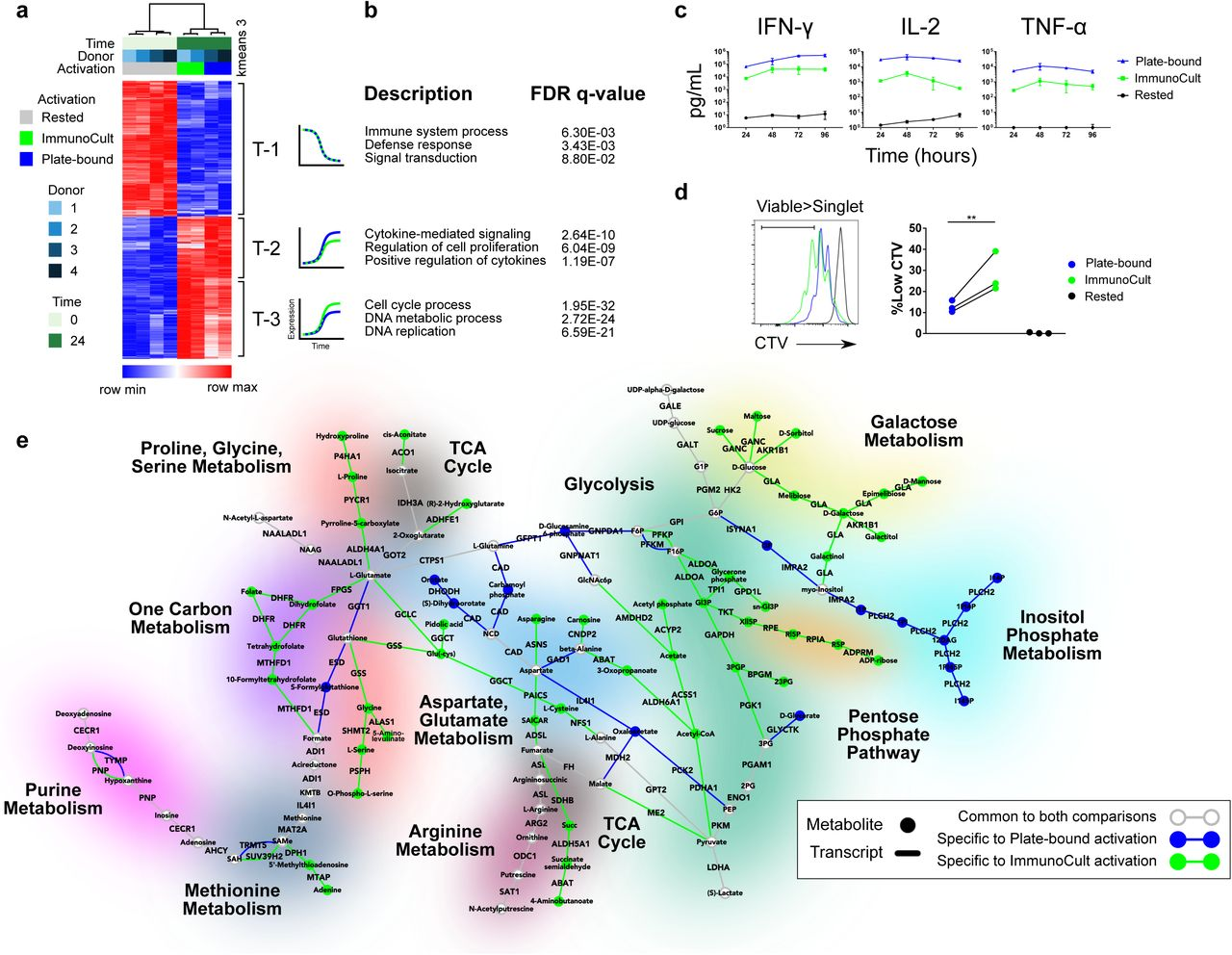 Integrated Metabolomic and Transcriptomic Profiling Reveals